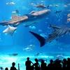 1歳9ヶ月子連れ沖縄旅行記! 〜3日目は美ら海水族館からロワジールホテル那覇へ!