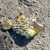 魚たちも恐いデビルフィッシュ