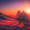「感謝の気持ちを伝える」<日干支読み>2018年1年22日【甲寅】「曲直の巨木」【天禄星】「樹林」
