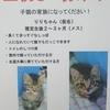 豆太郎くん、こたろうくん、ひめちゃん、マリちゃん+猫ちゃんの里親募集のお知らせ(追記)