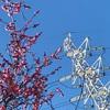春の気配と電線と。