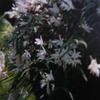 5月29日誕生日の花と花言葉句