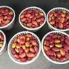 マンゴーの里「玉井」でマンゴーかき氷を食べる!&隣の「新化」に行ってみたin 台南