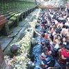 ティルタウンプル寺院の祭りで沐浴【世界遺産】バリ島