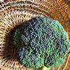 【秋冬野菜de食育 なぜブロッコリーが紫色になるの?いつもよりおいしく食べられるブロッコリーのおすすめゆでかた】