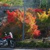 日本で二番目の高さ!温井ダムと紅葉ツーリング