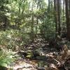 リアル「あつまれ どうぶつの森」!?ジャングルを3230㎡(約980坪)ほど買ってみた。