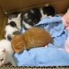 【猫版】ハナちゃんの動物病院 Complete④ ~診察記/闘病記~【保護猫、捨て猫、丸刈り、ダニ寄生、断脚、募金箱】
