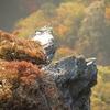 三嶺遊山「思い」