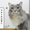 猫雑記 ~任されたお仕事~