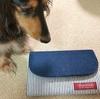 【マイクロチップ義務化】犬との引っ越しで必要な手続きとは?