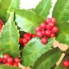 いつのまにか赤い実がなる木が育っていた!