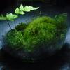 100均素材と自宅周辺で採った苔で簡単にテラリウムを作る。