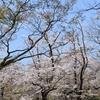 鶴見済さん主催、「不適応者の居場所」の花見企画に参加してきました