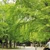 札幌史跡探訪 ― 中島公園その1 ―