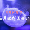 月9海月姫が面白い!感想・見逃したときはFODで動画をチェック!