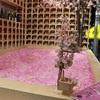 【最速個人レポート】表参道SAKURA CHILL BARで桜とお酒でチルするのが最高!