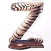 水彩画「Zebra / Zitherist」
