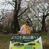 狭山公園お花見〜☆*:.。. o(≧▽≦)o .。.:*☆
