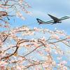 上昇する飛行機とサクラを撮る!成田・三里塚さくらの丘で撮ってきた【2018.4.1】