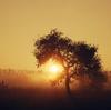 太陽瞑想法 から~の くしゃみ