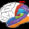 頭頂の脳回の読み方 MRI・CT
