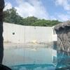 円山動物園、シロクマに興奮ー!