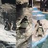 水族館 すみだ水族館の赤ちゃんペンギン