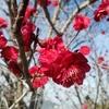 梅を見にいく 春のにおいがした