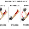 【筋肥大】筋肉を曲げる動きよりも伸ばす動きでデカくなる