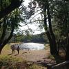 江田神社:日向三代を巡る旅 その14