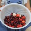 お庭の果樹で、子供とジャム作り2。ジューンベリージャム作り、大変なのは??
