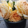 バラ開花セール