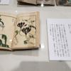 ■江戸の園芸熱:後期の展示と講演会のお話から