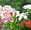 おニ階さんからのお花