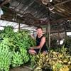 リーマントラベラー、ミャンマーで転職!?