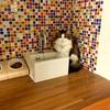 画期的な猫のエサ置き場&水飲み場のアイディア紹介