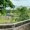 伊野田クルマエビ養殖池(仮称)(沖縄県石垣島)