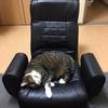 幸せホルモン・セルトニンがドバ~~っと溢れ出す「猫や猫柄グッズとの癒される空間💛」