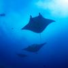 【挑戦】石垣島でダイビングするためにPADIのライセンスを取ることにしました