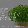 1346食目「豆苗をチューハイで育てた結果!」水ではなくレモンチューハイで豆苗を育てた人がいる!