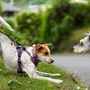 犬の挨拶を学ぶ。正しい犬との接し方。