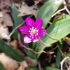 万寿山に春が来た