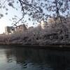 夜桜見物〜30日金曜日