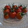 マンションでもできるズボラ主婦のベランダの簡単家庭菜園Ⅱトマトが実りました!