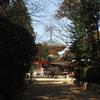 高野山・根本大塔とテングチョウ