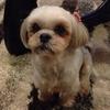 難しすぎた犬の似顔絵