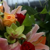 DAILY FLOWERS!!