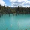 美瑛の青い池と白ひげの滝へ電車とバスでのお得な行き方