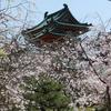 2021年 京都の桜をサイクリングで巡る4日間①